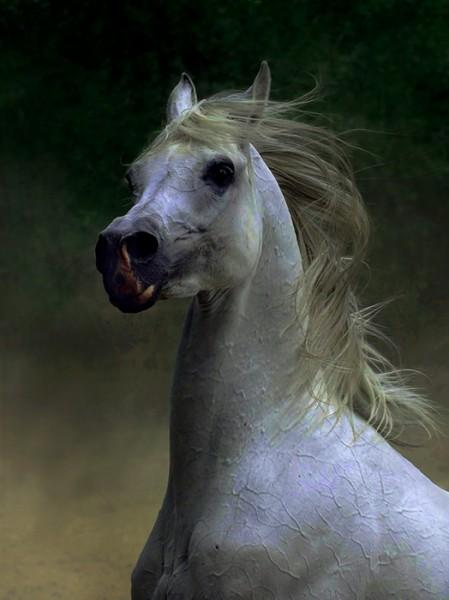 Прекрасных лошадок