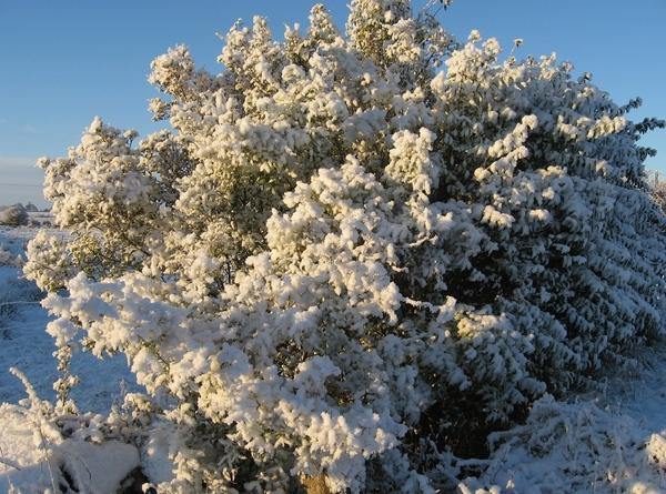 Спасибо за спасибо Зима у нас, в Ирландии Обычно у нас снега не бывает, или только один день после... - 2