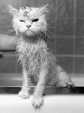 Помылся
