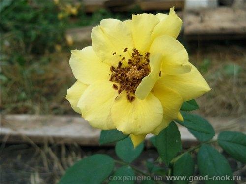 Светик, цветы потрясающие - 3