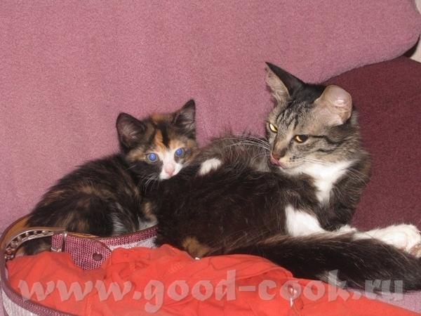Здравствуйте, знакомтесь мои бандитки старшая, мама в мороз подобрала беременную кошку, Буся родила... - 4