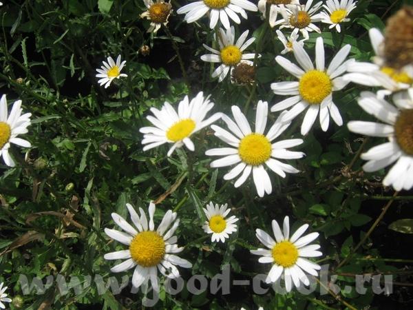 Я вам еще цветочков всяких принесла из моего цветника: - 4
