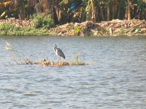Птиц в дельте Нила полно