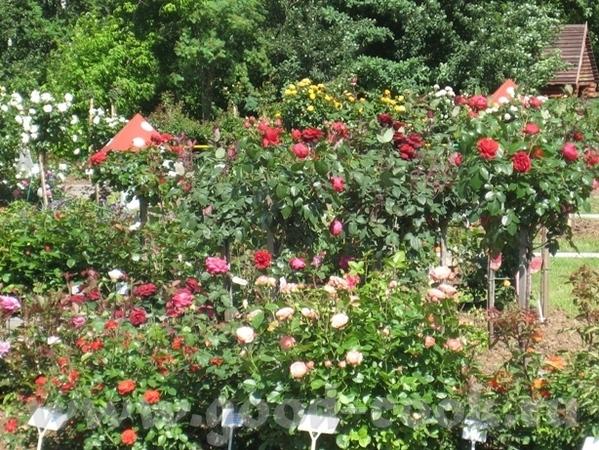 Покажу вам ещё немного цветов рядом со своим домом