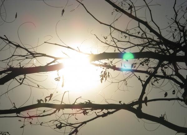 Танюша красивые фото, мох и листики дубовые - 4