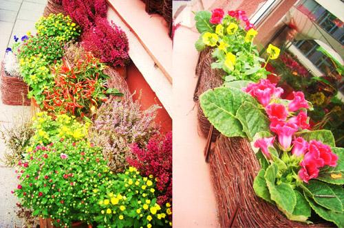 немного цветов для весеннего настроения (хотя фото сделаны осенью )