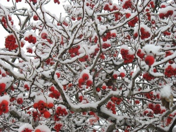 А сегодня у нас случилась зима