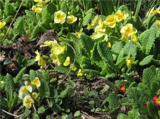 весна пришла и к нам, первые цветущие деревья и цветы в ботаническом саду, запахи стоят я вам скажу... - 5