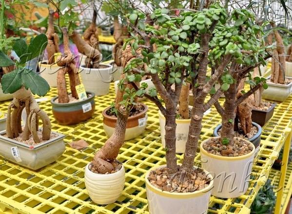 И растения других видов Тилландсия - 5