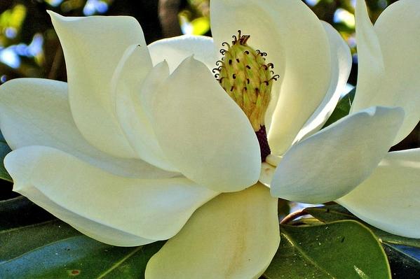 Так ведь это очень xорошо что появилось больше народа- форум на то и держится Весна, цветут магноли... - 6