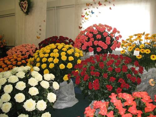 Царство роз Гитара из цветов Фонтан - 2