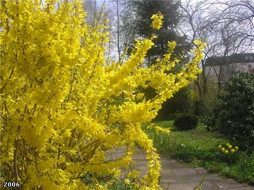 А еще расцвели такие желтые кусты