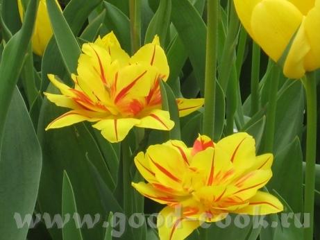 Покажу ещё несколько фоток с цветами из того-же скверика мне фотка понравилась с геоцинтами Танюш,... - 6