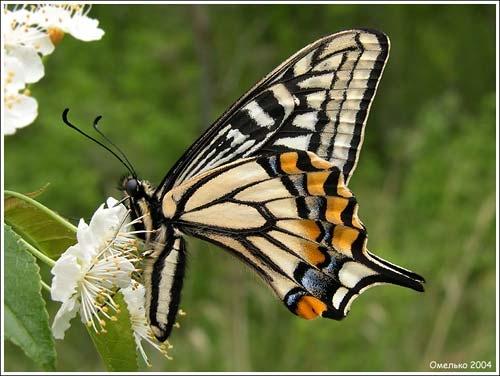 У бабочек спинки другие,и носик клювиком видно - 3