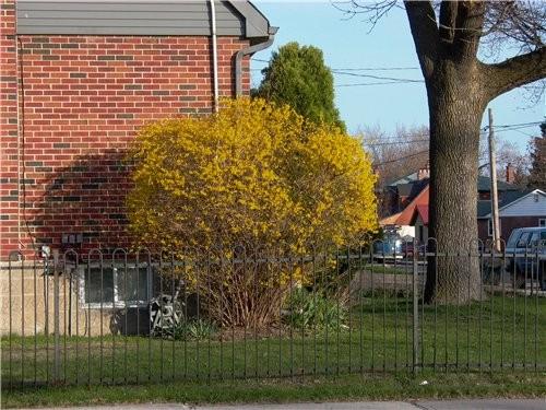 А вот такая прелесть росла и цвела под окнами нашего апартмента - 7