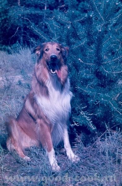 А я хочу вам рассказать о нашей собаке Роджере, которой уже нет - 2