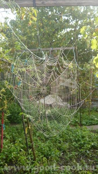 Осень у меня в саду, огороде - 4