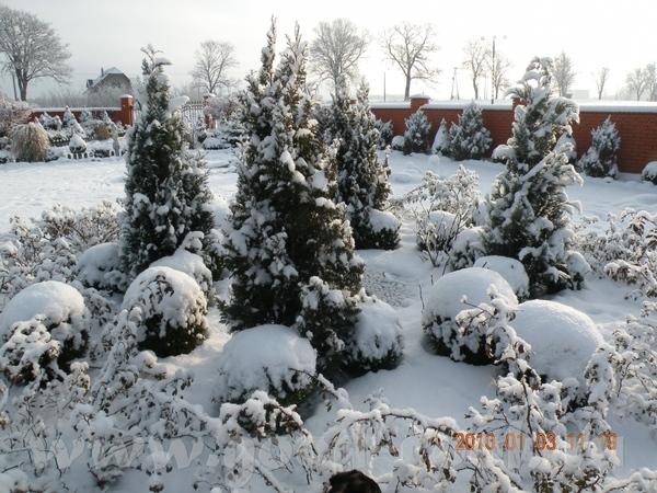 Девочки, мой огород летом вы видели, предлагаю посмотреть зимой - 4