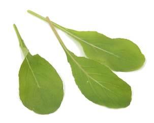 РАШРАД ЭТО Японский салат по русски мизуна = паучья горчица Нежные листья и приятный, острый аромат - 3