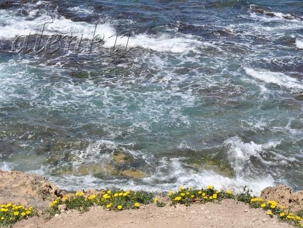 Стоя на вершине ракушечной скалы, обозреваем захватывающие картины моря и островков, волн и побереж... - 6