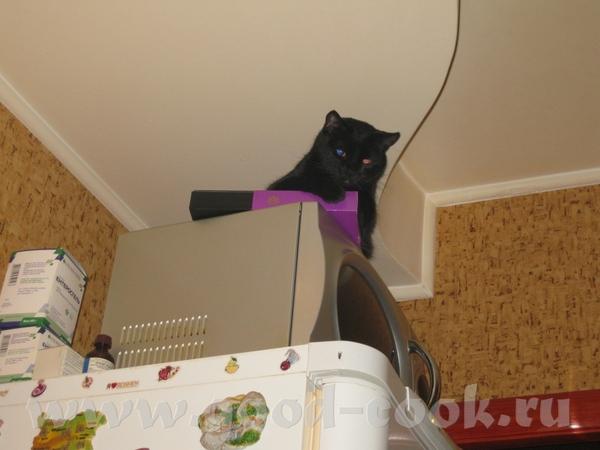 А это наша кошка, сидит на холодильнике и наблюдает как мы ужинаем (ужин на предыдущей странице)