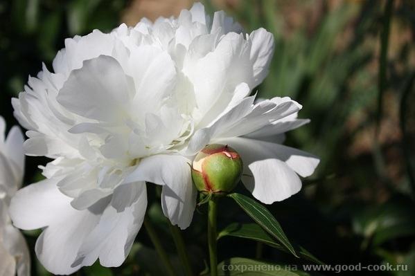 Витражи какие красивые и цветник просто райский - 3