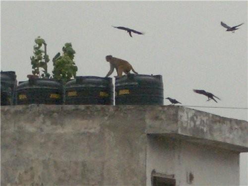 фотография из центра дели, вдалеке видно триумфальную арку (indian gate) тут на крыше видна обезьян... - 2