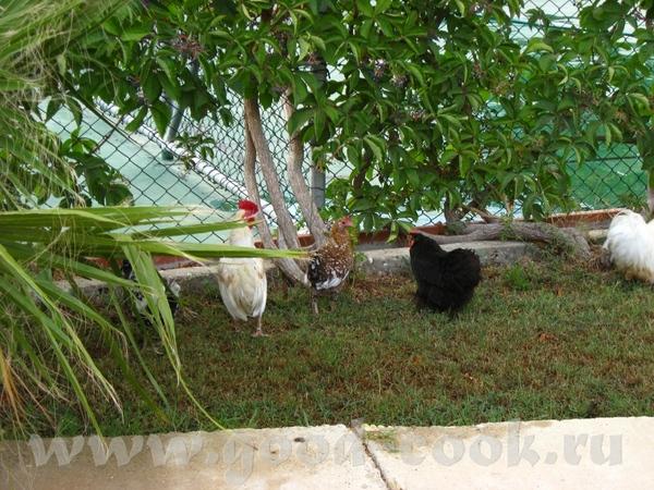Маленький зоопарк расположен за детскими домиками - 2