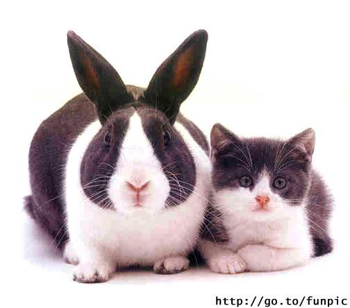 да все едино А еще кролики редко приучаются ходить в кювету, ну может мне не попадались умные кроли...