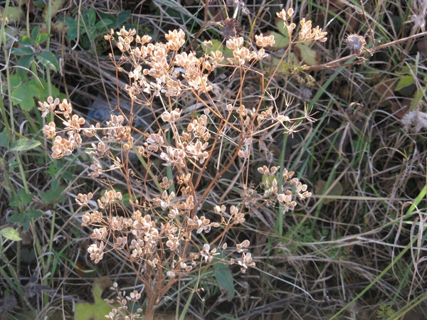 Танюша красивые фото, мох и листики дубовые - 6