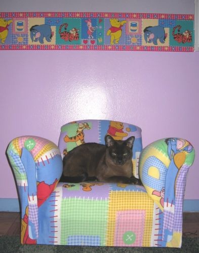 Мы купили маленькое детское кресло под цвет бордюра Так кот его уже оприходовал