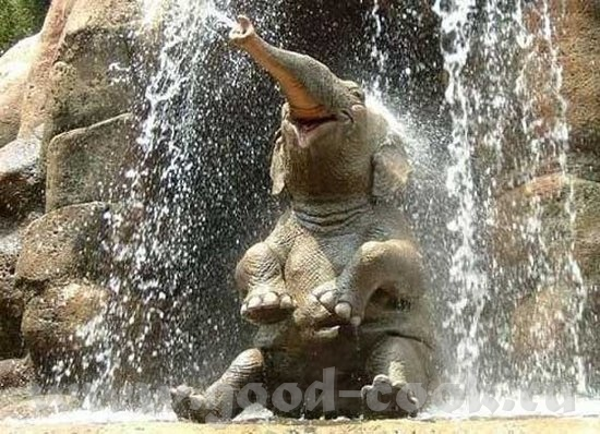 Слон классный - 3