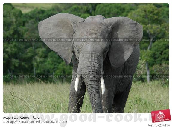 Слон классный
