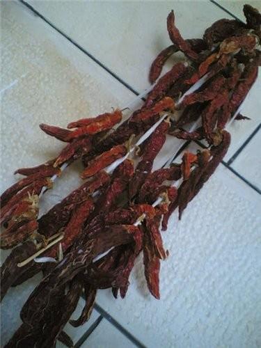 перец сушёный на солнце Ну вот, это первый овощ ,который я высушила на солнце