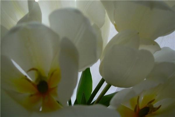 Лар у вас уже поздние цветут, а у нас только начали и черёмуха пошла вот и похолодало