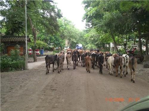 Скорость вашеи машины в Никарагуа часто регулируется скоростью коров Немножко пляжа, ето уже точно...