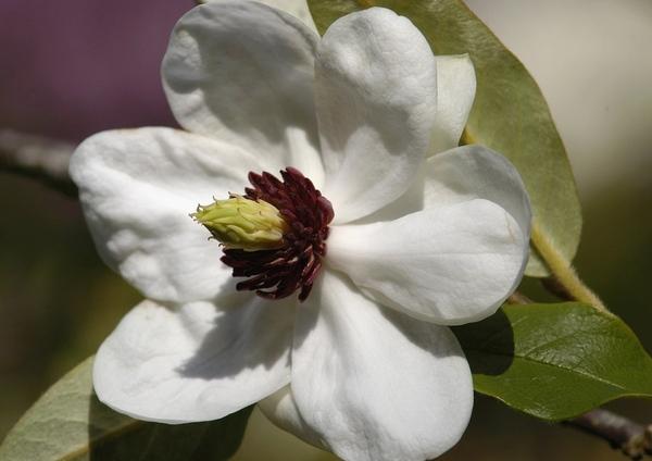 Так ведь это очень xорошо что появилось больше народа- форум на то и держится Весна, цветут магноли... - 9