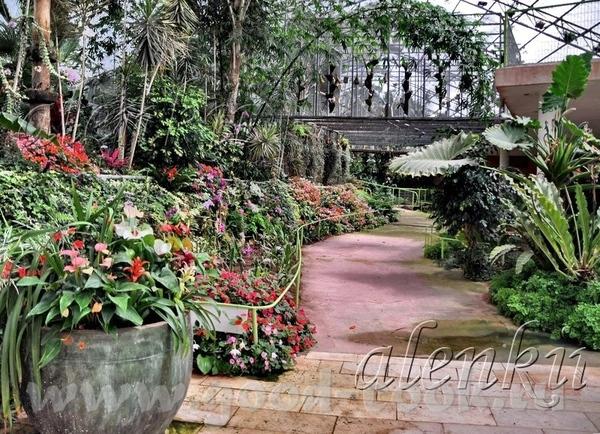 Среди растений стоят скамейки, где можно присесть отдохнуть и полюбоваться окружающей красотой