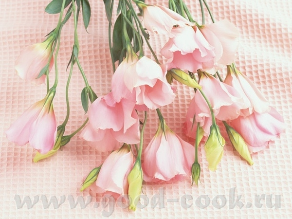 Поздравляю скорпиошу, и цветы - моей хорошей