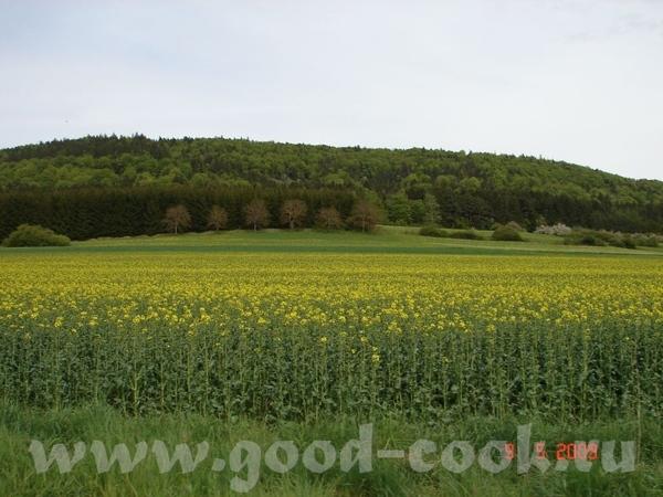 вот что вокруг нашего городка моя аллергия цветёт -рабс а это уже чуть подальше от нас 8 км - 2