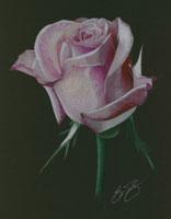 Уроки по рисованию Рисуем цветными карандашами Магнолия - урок от Михаила Рисуем цветы от Михаила У...