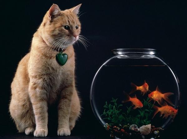 Кому кошки нужны Кошкин форум - 9