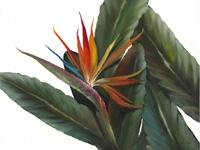 Дженкинс, который был пропущен в прошлом году 2010 - 6 - тропический парадиз 2010 - 7 - розы в раме - 2