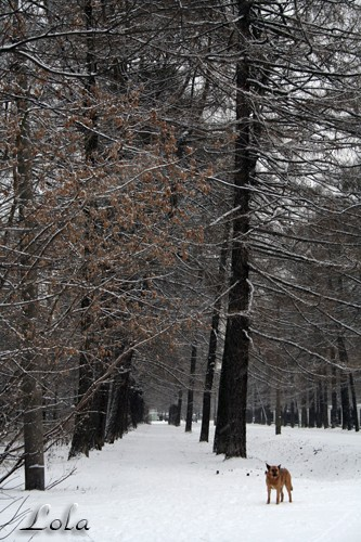 В Москве наступила зима - 2