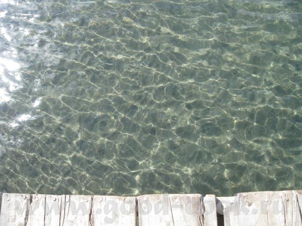 Вода-позрачная как слеза Вот здесь и живут черепахи
