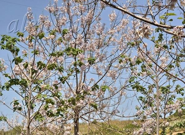 ДИКИЙ ПЛЯЖ ПАЛЬМАХИМ И снова апрель… Так совпало,что именно в середине весны,пока еще не жарко,мы п...
