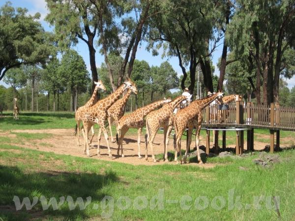 Теперь погуляем по Зоопарку - 3