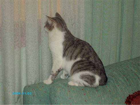 , Сауле, котёнок какой чудный - лапушка маленькая прямо