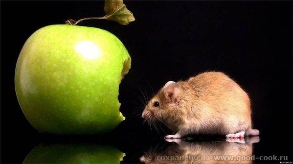 О!! Пришла домой дочка и говорит чтоб не белое плоское яблоко сделала, а объемное , реалистичное и надгрызанное!! Единст... - 2