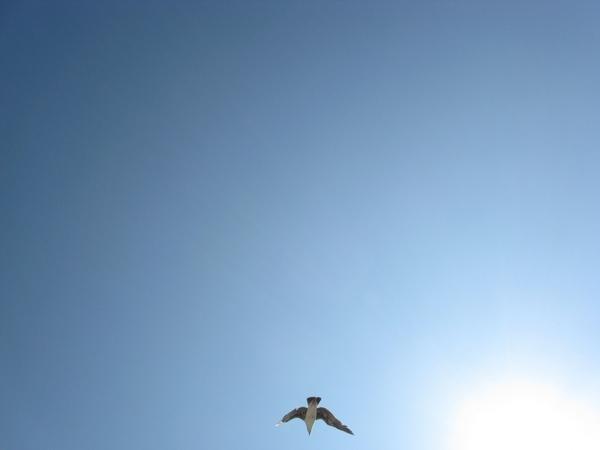 Хочу еше вам показать немного Калифорнийского неба, очень красивого с необычными оттенками синевы - 8